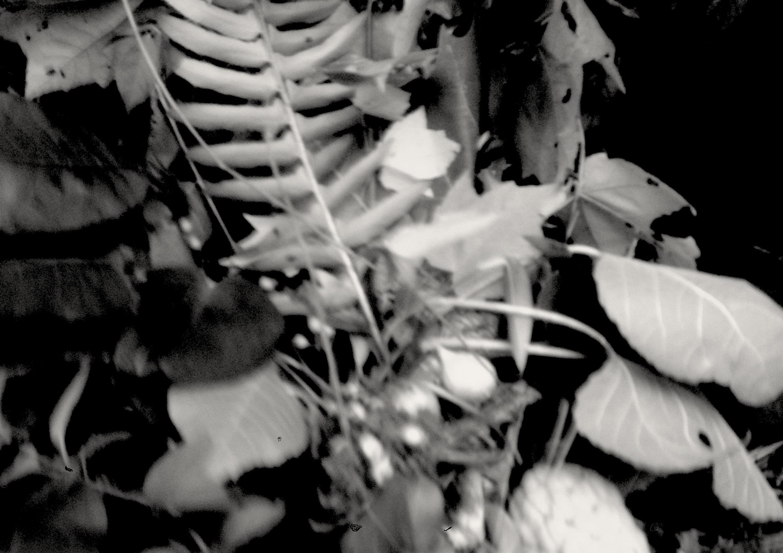 ritual plants